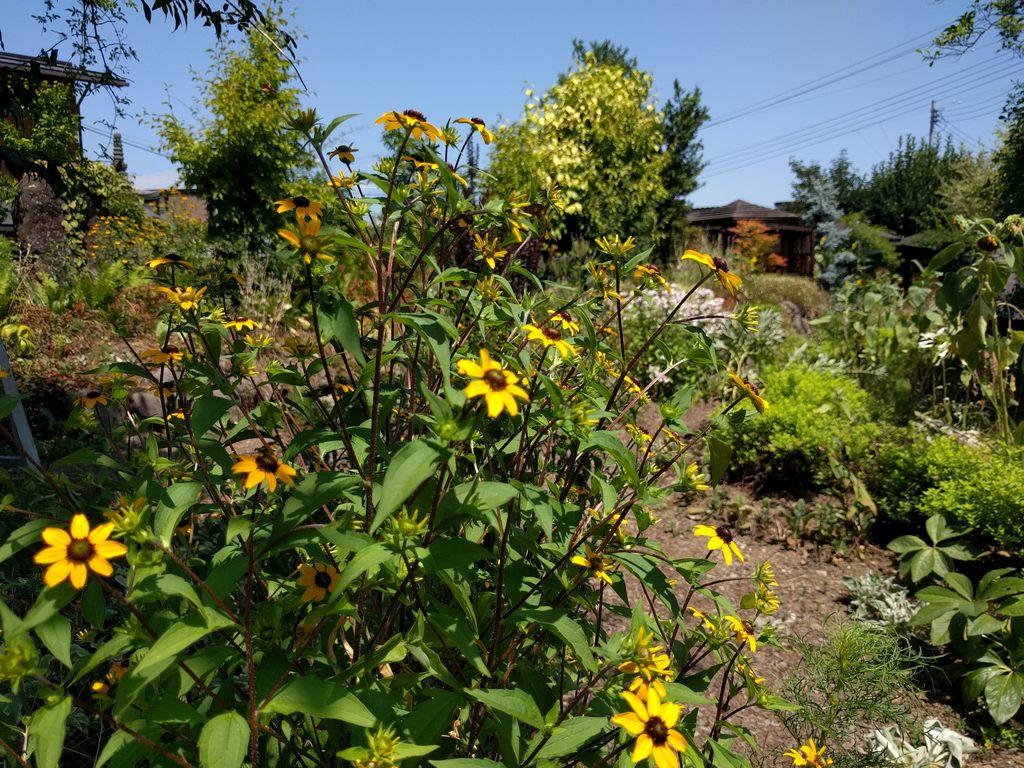 ミツバチガーデンカフェのお庭02