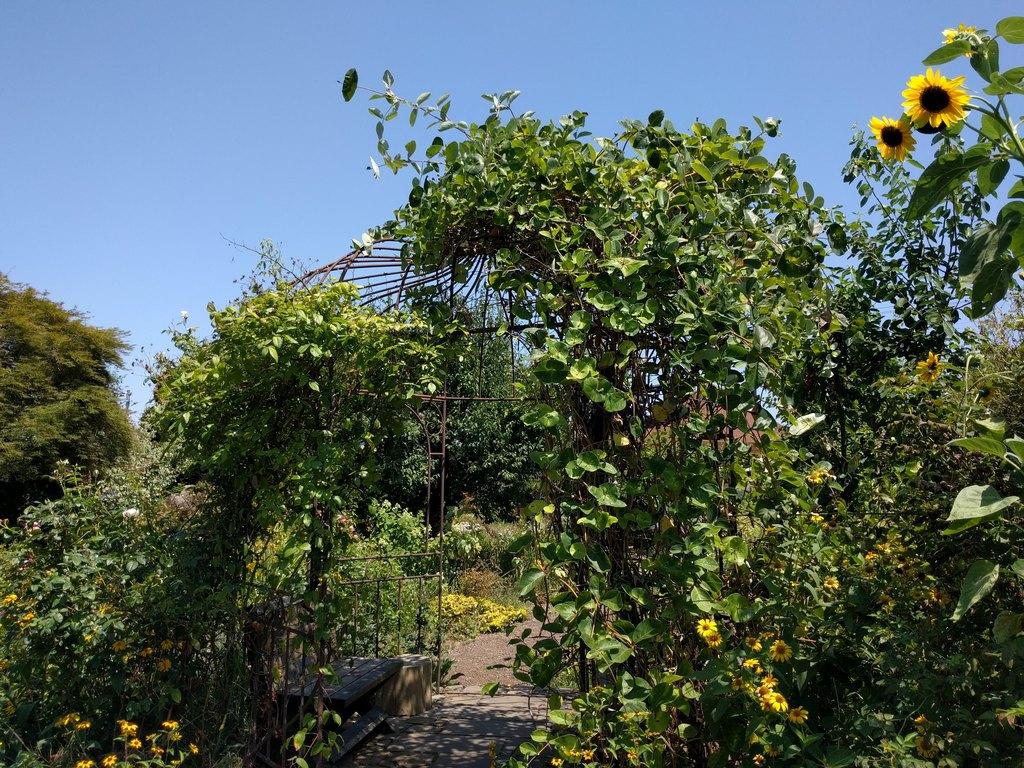 ミツバチガーデンカフェのお庭04