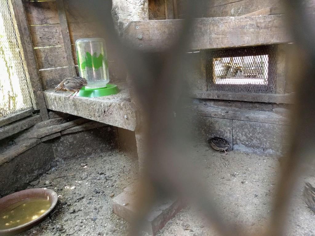 ミツバチガーデンカフェのお庭07