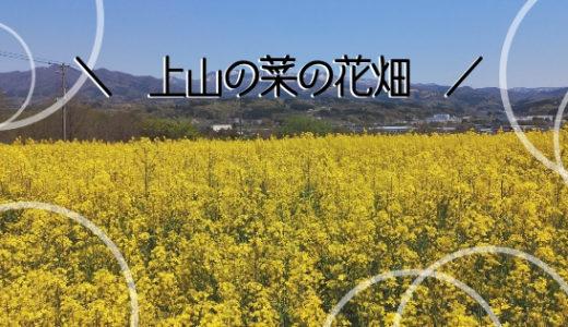 上山に菜の花畑が出現!フォトジェニックスポットが期間限定でお目見え